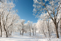 Trees with hoarfrost, Minnesota